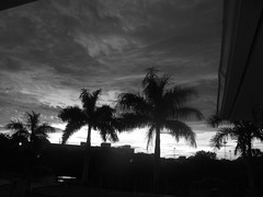 Black & White Sunset (soniaadammurray) Tags: trees sunset sky buildings blackwhite digitalphotography artinbw