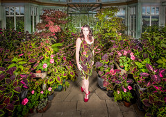 Self Portait with my coleus (http://heatherbuckley.co.uk) Tags: colour victorian conservatory greenhouse coleus