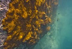 DSC09201 (andrewlorenzlong) Tags: fish coral thailand snorkeling kohchang kohrang kohrangyai korangyai