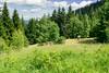 DSC_2456 (czargor) Tags: mountains landscape hill mountainside beskidy inthemountain dogtrekking beskidzywiecki
