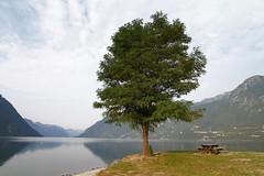 Arbol (vic_206) Tags: agua water lago lake arbol tree paisaje landscape canoneos7d tokina1116f28atxprodx montaas mountains italia italy