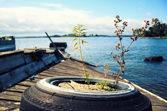 Resilience in a Nut Shell (or Tire, as it were) (j.a.haslett) Tags: tire plants growth resilience lake dock styrofoam island lakeofthewoods ontario sabaskongbay canon eos 70d