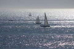 Boats (Albert Jafar) Tags: boats sailboats santamonica reflection outdoor horizon ocean california southerncalifornia