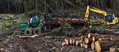 Round Wales Walk 49 - Timber Land (Nikki & Tom) Tags: wales uk walescoastpath roundwaleswalk gwynedd logging timber machinery forestry