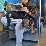 NS, Man met Hond thumbnail