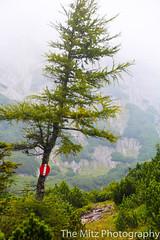 IMG_3421 (The Mitz Photography) Tags: gams grünersee hochschwab mariazell maryclan murmerl mädels nebel pilgern sommer steinbock wandern
