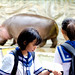Pygmy Hippopotamus with Junior High School Girls in Ueno Zoo : 女学生とコビトカバ(上野動物園)