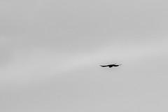 DSC03799 (frame=photo) Tags: bird mountain single grossglockner