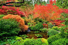 Autumnal Face (Ireena Eleonora Worthy) Tags: bridge autumn trees canada colour fall nature beautiful landscape japanesegarden waterfall maple bc britishcolumbia awesome victoria top10 butchartgardens ireenaworthy northernstraitsphotography