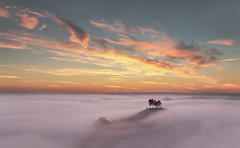 New Day Rising (Tony Gill) Tags: trees mist fog sunrise dawn landmark dorset bridport symondsbury colmers