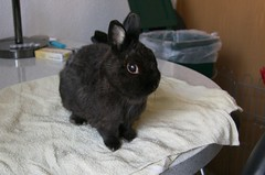 Hasi muss zum Friseur (blumenbiene) Tags: rabbit bunny coat fell hase kaninchen hasi karnickel fellwechsel