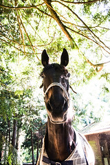 Mr Ed (Chadwise) Tags: horse angle wide equestrian