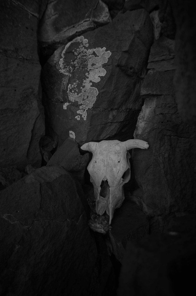 Skull and lichens