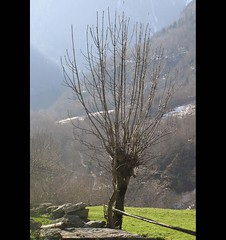 without branches... lifeless (xeniussonar) Tags: oltusfotos theinspirationgroup