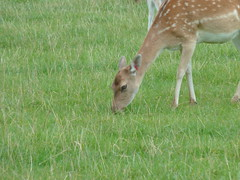"""Longleat Safari Park • <a style=""""font-size:0.8em;"""" href=""""http://www.flickr.com/photos/81195048@N05/8017688985/"""" target=""""_blank"""">View on Flickr</a>"""