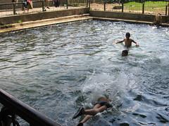 (durgeshnandini) Tags: india water speed dive splash dslr canoneos400ddigital durgeshnandini