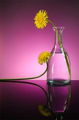 _DSC1903_2 (Lino Sgaravizzi ) Tags: stilllife giallo fiori colori vetro mygearandme mygearandmepremium mygearandmebronze mygearandmesilver mygearandmegold mygearandmeplatinum mygearandmediamond ruby10