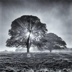 Mane (polarisandy) Tags: trees colour tree film rolleiflex mediumformat square aperture kodak 66 squareformat vintagecamera analogue planar twinlensreflex 35f kodakportra400 frankeheidecke synchrocompur heidosmat epsonv600 aperture3 filmrolleiflexsquare wwwpolarisandycom