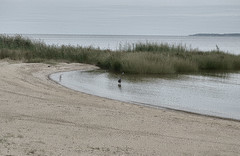 Colonial Beach, VA (Megan @ Cest Moi Artful Imaging) Tags: bird water river photography bay virginia nikon outdoor waterbird cestmoi eastcoast waterscape colonialbeach megandonovan cestmoiartfulimaging