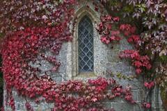 Virginia Creeper and Window, Clock Arch, Stourhead (Peter Cook UK) Tags: window wiltshire virginiacreeper stourheadhouse clockarch