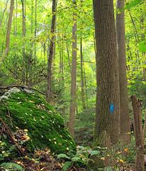 Blue Blaze (Nicholas_T) Tags: autumn trees forest moss rocks hiking pennsylvania trail creativecommons ravine blaze ferns yorkcounty blazes riverhills masondixontrail apollocountypark chancefordtownship