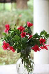 (Sonali Dalal) Tags: flower pot hibiscus textured