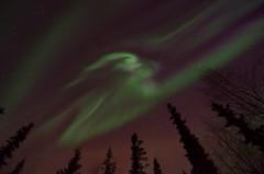 scrunched (Lee Petersen) Tags: sky green alaska night ak fairbanks northernlights auroraborealis cme spaceweather