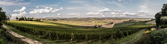 From Castellina in Chianti to Siena