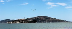 IMG_5489 (ankurgupta17) Tags: san francisco sea bird hills us united states water cloud canon 600d t3