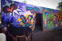 graffiti - tats cru - jardin rouge, marrakesh (urbanpresents.net) Tags: art graffiti jardinrouge kersavond marrakech marrakesh morocco publicart street streetart tatscru urban urbanart urbanpresentsnet