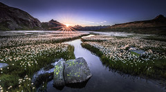 Switzerland: Alpine Sunrise (Frederic Huber | Photography) Tags: landschaft canoneos5dsr frederichuber landscape wonderpana free arc fotodiox switzerland schweiz suisse cotton grass wollgras sunrise sunset sonnenaufgang sonnenuntergang sunstar sunburst 1124 alps alpen mountain mountains purple blue blau moor explore explored