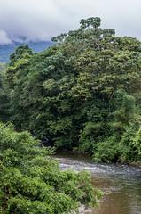 _NGE7740.jpg (Nico_GE) Tags: selvahumedatropical colombia sancipriano pacifico comunidadesafro valledelcauca co