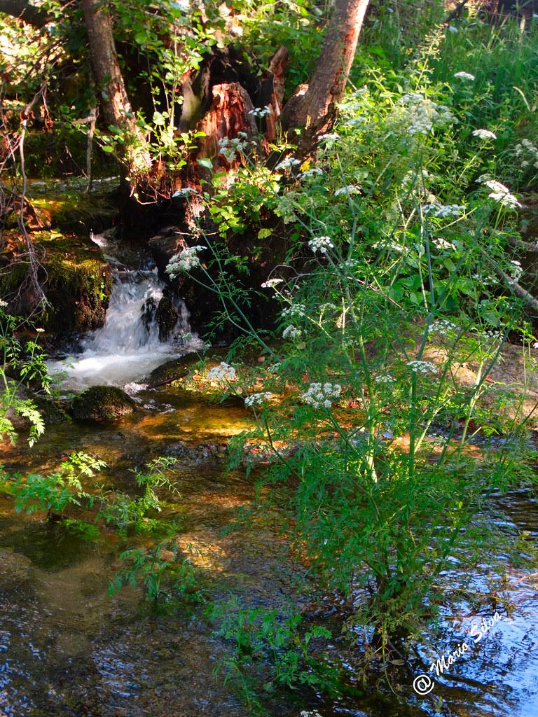 Águas Frias (Chaves) - ... regueiro ainda com água ...