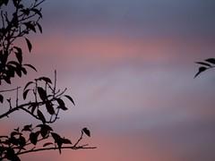 Sunset 20160830 (caligula1995) Tags: 2016 balconygarden clouds plumtree sunset
