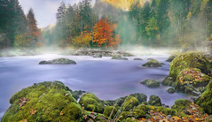 Morning fog on the river enns (Bernhard Sitzwohl) Tags: fog river enns admont gesuse nationalpark water wildwater trees autumn indiansummer moss green rocks wetrocks fluss moos nebel nebelstimmung herbst landscape landschaft nature natur outdoor ~themagicofcolours~xii