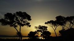 Lever de soleil Presqu'le de Giens (marc.fray) Tags: leverdesoleil sunrise lamadrague giens presquledegiens var ctedazur pins soleil ombre arbres mditerrane france silhouette silhouettes paca