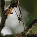 Unbekannte Insekteneier (09)