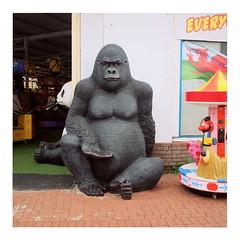 Pride (ngbrx) Tags: barryisland wales barry gorilla amusement uk greatbritain unitedkingdom