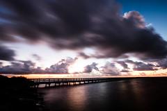 Before Sunrise (Daniel Ray) Tags: animal bird galveston seabrook bay gully park pine sunrise