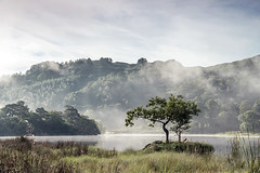 Early Morning Lone Tree (loftylion9) Tags: grasmere lakedistrict sunrise mist sunset lonetree tilberthwaite castleriggstonecircle langdalepikes