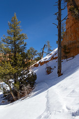 On the trail in Bryce (GeekFieldGuide) Tags: brycecanyon brycecanyonnationalpark geekfieldguide utah winter