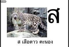 ส เสือดาว คะนอง