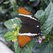Farfalla (Recinto del Pensamiento)