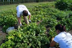 DSC03845 (NNAAC) Tags: food garden 911 detroit hunger produce september11 harvesting homelessness aok arabamerican foodsecurity focushope actsofkindness serviceday dteenergygardens 12annualmeeting