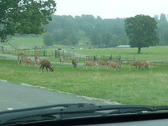 """Longleat Safari Park • <a style=""""font-size:0.8em;"""" href=""""http://www.flickr.com/photos/81195048@N05/8017727149/"""" target=""""_blank"""">View on Flickr</a>"""