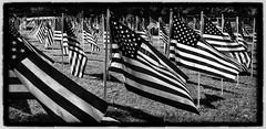 Flags (rocksandstuff) Tags: blackandwhite usa stripes massachusetts flags