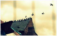 Departure (Pra) Tags: rooftop birds canon fly flight derelict departing rebelt2i