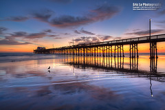 a bird (Eric 5D Mark III) Tags: california blue sunset sky usa cloud seascape color reflection bird beach water canon landscape photography pier sand ray unitedstates seagull wideangle newportbeach orangecounty tone tiltshift ericlo tse17mmf4l eos5dmarkiii 5d3 tse17l