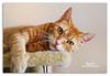 (miguel68) Tags: gato gata felino turrón miradafavorita ojosfelinos nikon35mmf18g