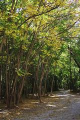 Chehlmir -Tandooreh park/ -   (P A H L A V A N) Tags: park flower fall photography photo persian dar persia pars  sina   farsi    fars parsi daregaz   dareh  peria  dargaz   pahlevan   pahlavan     tandoreh darehgaz darhgaz chehelmir